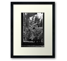 Looking through. Framed Print