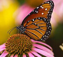 Monarch  by joelleherman