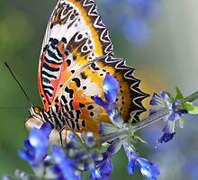 Lacewing in Blue by joelleherman