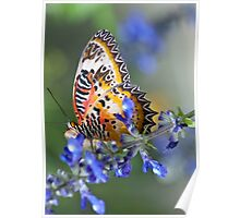Lacewing in Blue Poster