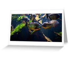 Red bellied piranha or red piranha Greeting Card