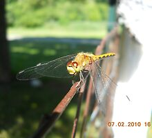Dragonfly by AlyGurl