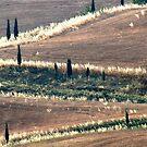 Zigzag-Tuscany by Deborah Downes