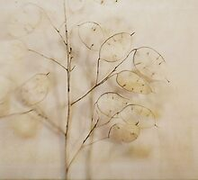 Lunaria no. 2 by Bethany Helzer