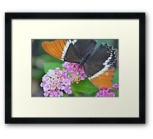 Brown and Black Butterfly on Lantana Flowers Framed Print