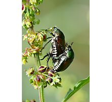 Love Bugs. Photographic Print