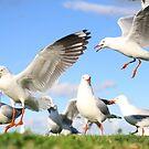 An attack of seagulls by ~ Fir Mamat ~