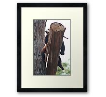 Red Panda Sloth Framed Print