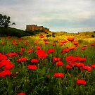 Bamburgh Poppies by Tarrby