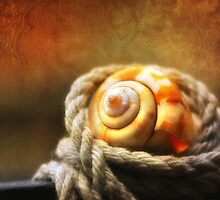 Tangled Shell by Dragos Dumitrascu