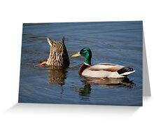 """""""Ooh... I like your tail feathers"""" Greeting Card"""