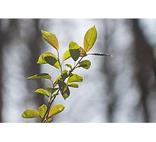 A leaf in the wind Photographic Print
