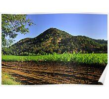 Winters Road Vineyards  •  Winters, California Poster