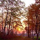 Assamese sunrise, Bansbari Jungle Lodge. by John Mitchell