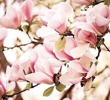 Pink Magnolia vintage fine art by Arletta Cwalina
