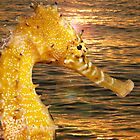 Sea Horse sun rise by JonMilnes