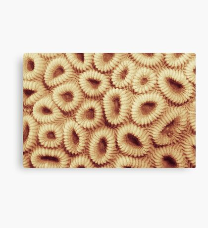 Hoops coral Canvas Print