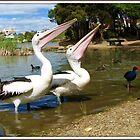 Is it a bird, Is it a plane ???? by shortshooter-Al