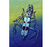 Super Beetle Photographic Print