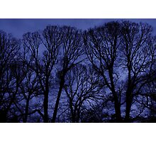 Fitzroy Trees Photographic Print