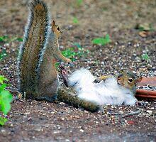 OH PLEASE RUB MY BELLY AGAIN PLEASE!!!.jpg by Photography by TJ Baccari
