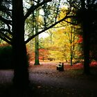 A seat in the woods... by Astrid Ewing Photography