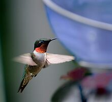 Ruby Hummer by Robin Webster
