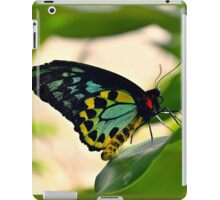 Cairns Birdwing Butterfly (Ornithoptera priamus) iPad Case/Skin