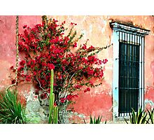 Flower House Photographic Print