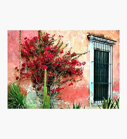 Flower House Photographic Print