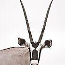 Oryx by JustineEB