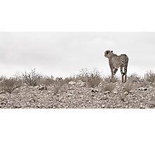 Kalahari Vista Photographic Print