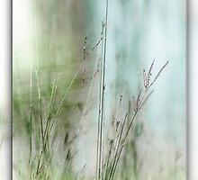 Water Side Peace © Vicki Ferrari Photography by Vicki Ferrari