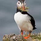 Nesting by JustineEB
