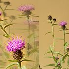 Cornflowers by DonDavisUK