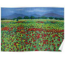Mallorcan Flowerfield Poster