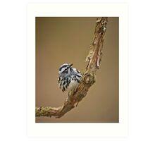 Black & White Warbler Art Print