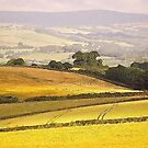 South Hams Landscape by Mike  Waldron
