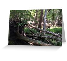 Naturescape 78 Greeting Card