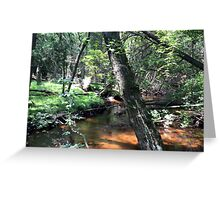 Naturescape 80 Greeting Card