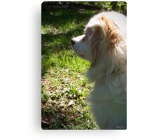 Profile in Shadow Canvas Print