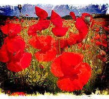 Poppies in the Field by Smudgers Art
