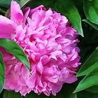 Peek-a-boo Peony by Nadya Johnson