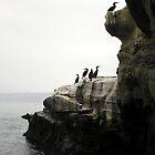 Cormerants On the Cliff by Carla Wick/Jandelle Petters