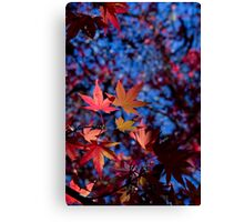 Fire Flakes Canvas Print