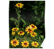 Blackeyed Susans - Self-arranging Poster