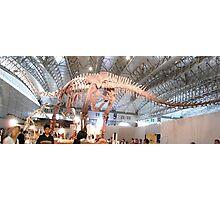 Pretty Mamenchisaurus Photographic Print