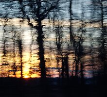 Abstract forest sunset by arocksphoto