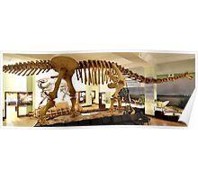 Beautiful Mamenchisaurus Poster