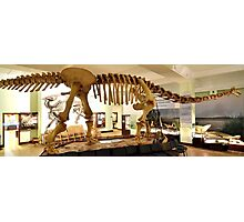 Beautiful Mamenchisaurus Photographic Print